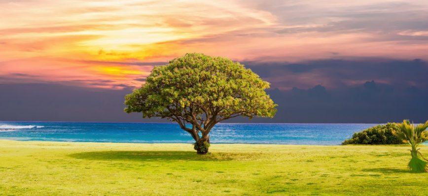 Saúl debajo de un árbol - salvo X gracia